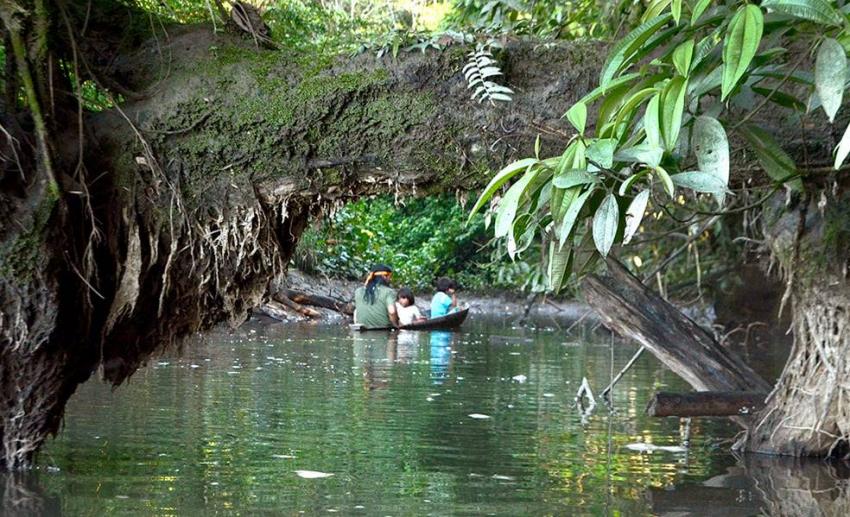 Medio millón de indígenas del bosque amazónico en las Cuencas Sagradas necesitan combatir los efectos de la pandemia